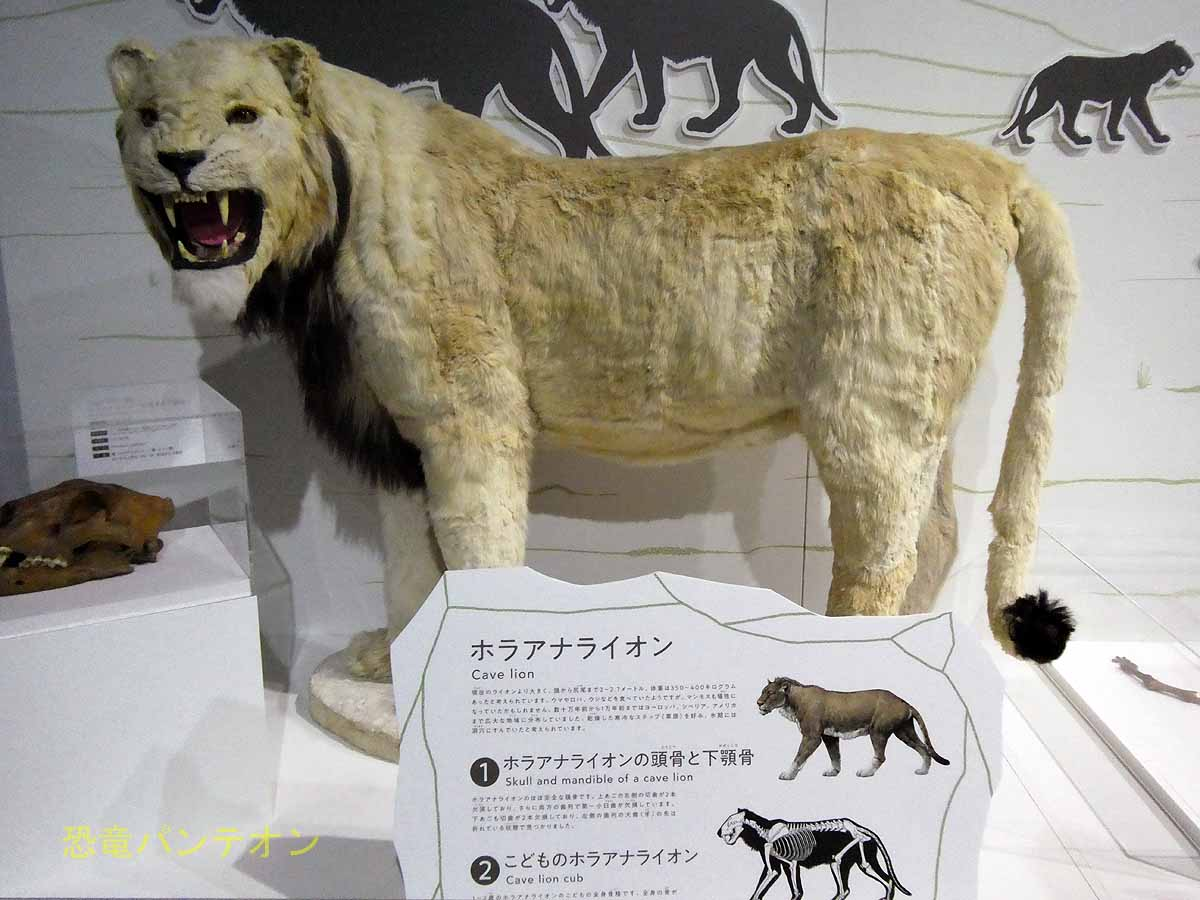 ホラアナライオン復元像