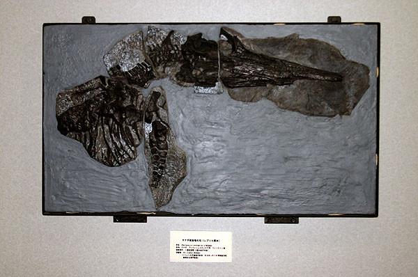カナダ産魚竜化石