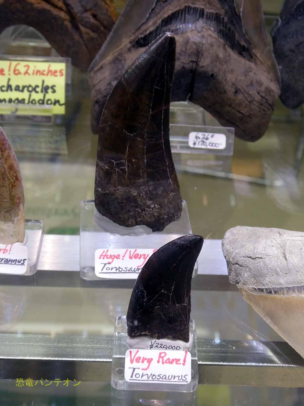 トルボサウルスの歯