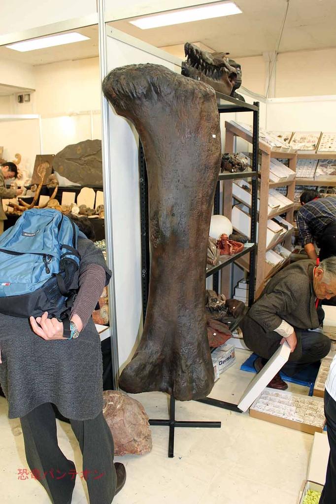 Treasures of the Earth Ltd この大腿骨はレプリカのようです。70,000とついていました。
