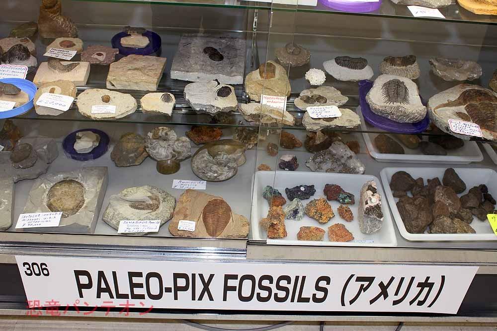 PALEO-PIX FOSSILS アメリカのお店です。三葉虫を出しています。
