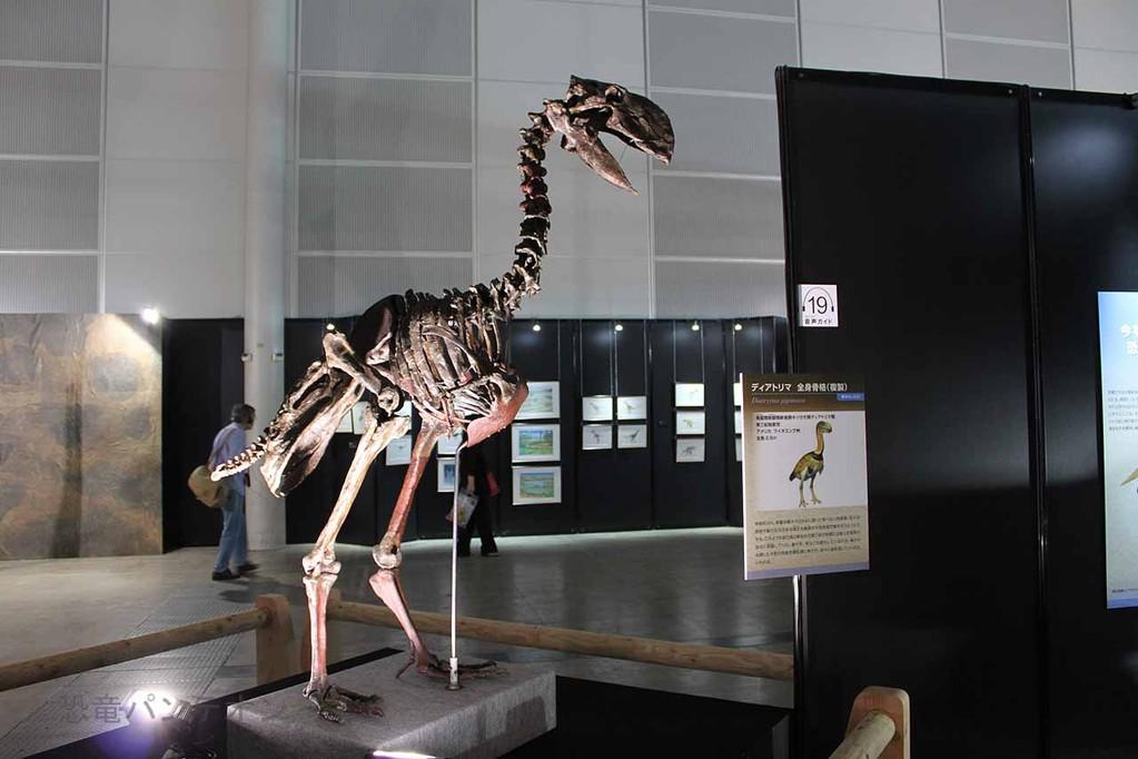 エピローグ(新生代初期)に展示されている、ディアトリマ骨格