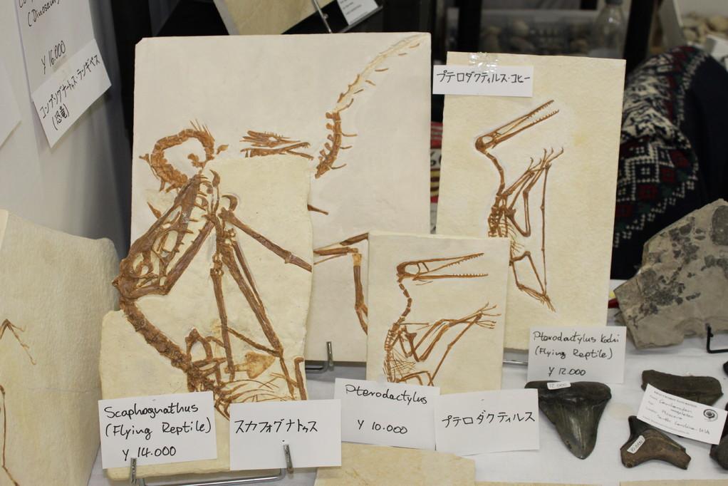 Krautworst Naturstein スカフォグナトスやプテロダクティルスのレプリカ