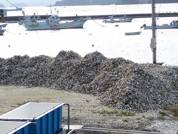海岸には牡蠣殻の山