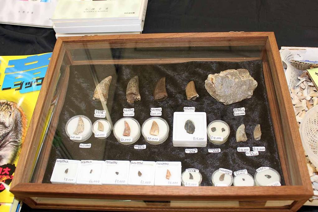 肉食、植物食、いろいろな恐竜の歯化石