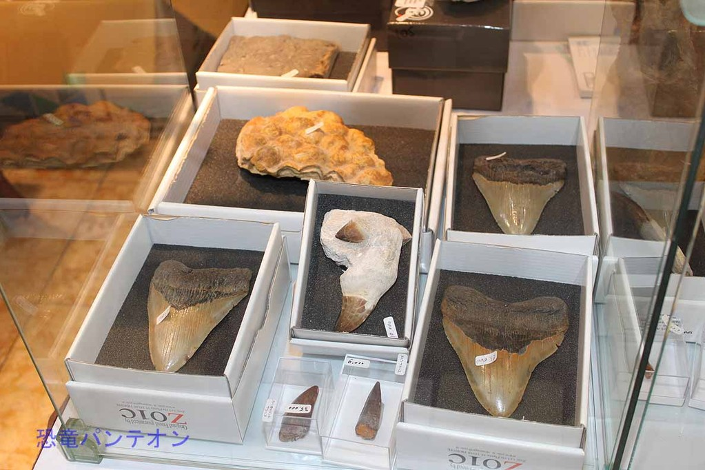 Zoic Sri カルカロドン、モササウルス、スピノサウルスあたりでしょうか
