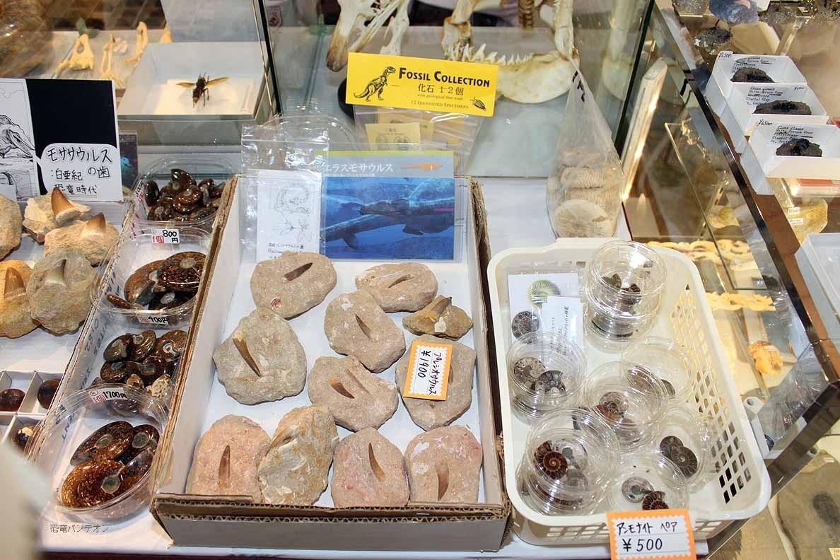 (有)ミュージアム インポート プレシオサウルス歯やアンモナイトなど