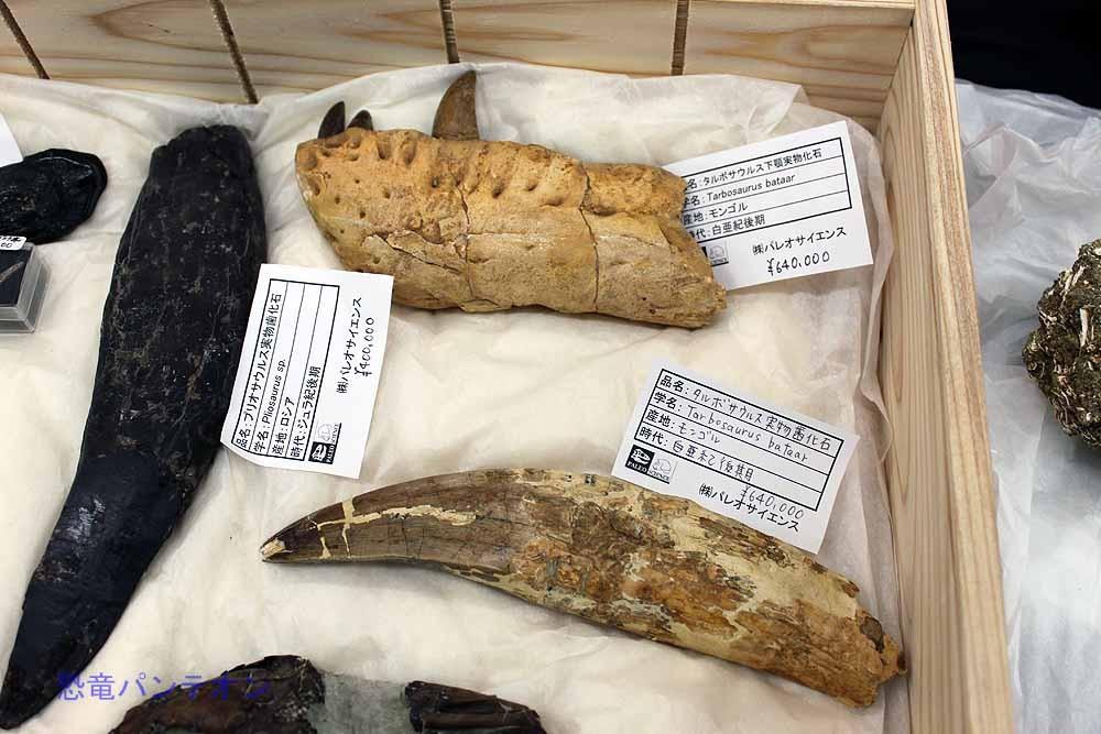 タルボサウルス下あごと歯。各64万円