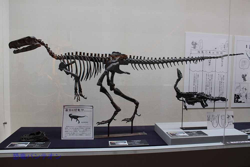 2番目に、三畳紀に出現した初期の恐竜や、原始的な特徴をもった肉食恐竜を紹介しています。