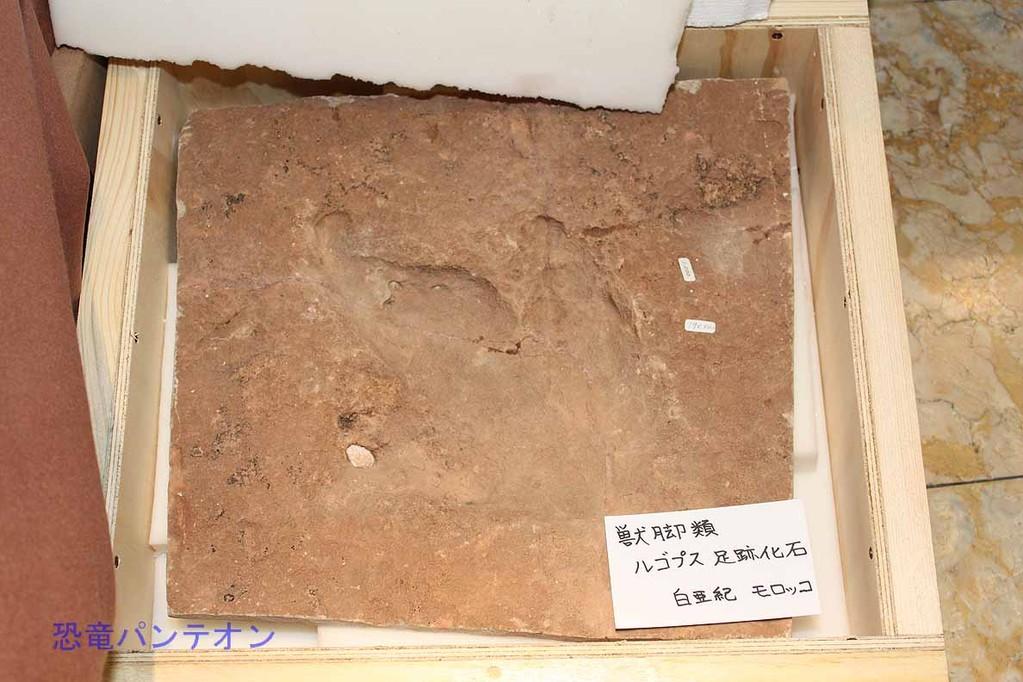 Zoic Sri ルゴプス足跡化石レプリカ 白亜紀後期 モロッコ 店主は初めてのレプリカと言っていました。