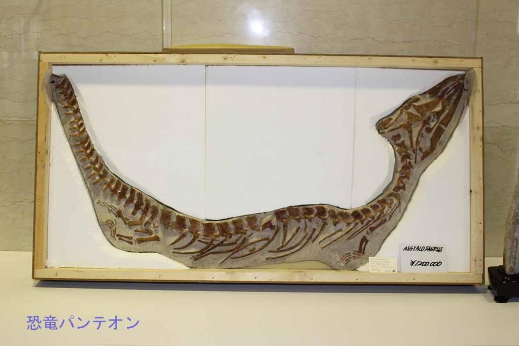 第二会場 アイギアロサウルス 120万円