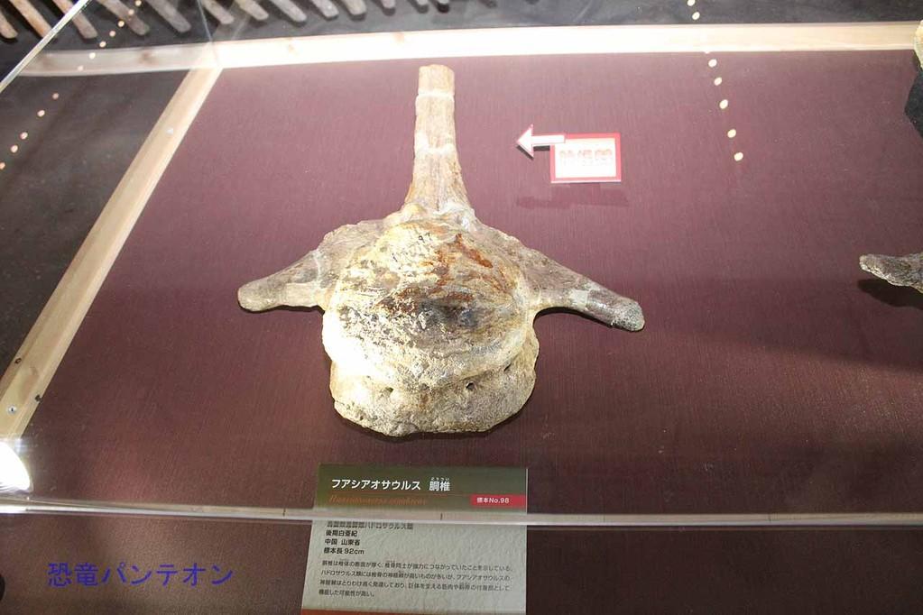 フアシアオサウルス尾椎