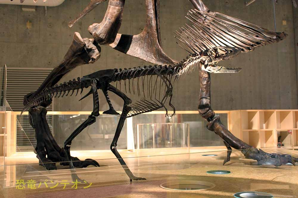 ティラノサウルス幼体は、近縁のタルボサウルスを参考に製作されたそうです。