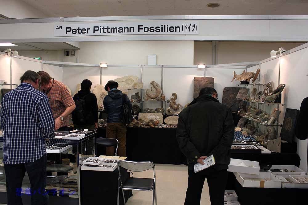 Peter Pittmann Fossilien ここもドイツのお店です。やはり海ものが多い