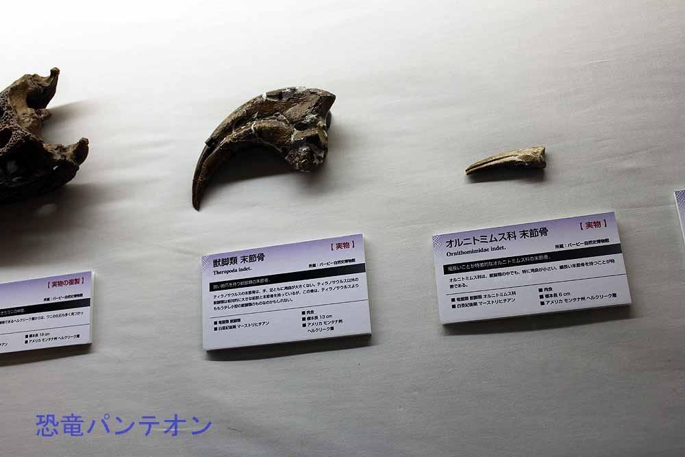 獣脚類末節骨