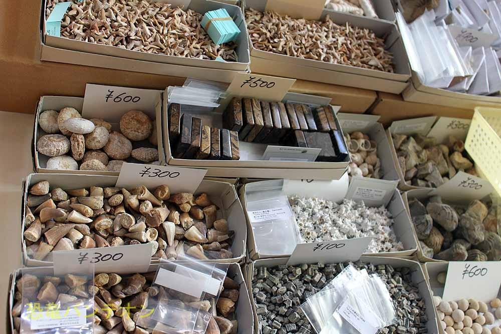(株)東京サイエンス 小学生でも買える値段の化石が並んでいます。