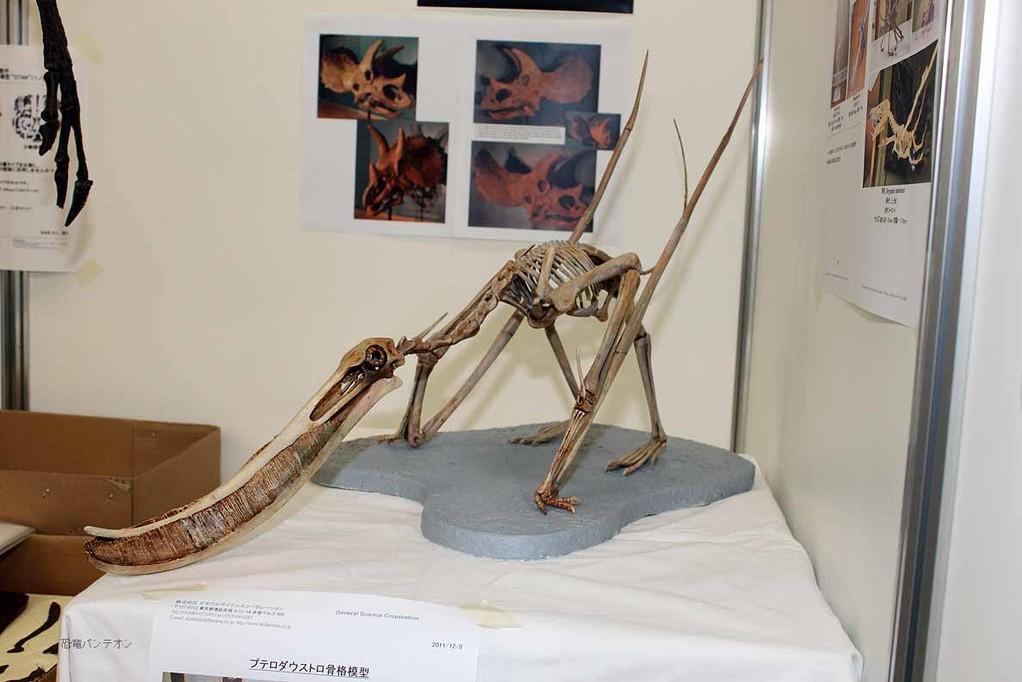 プテロダウストロ骨格模型