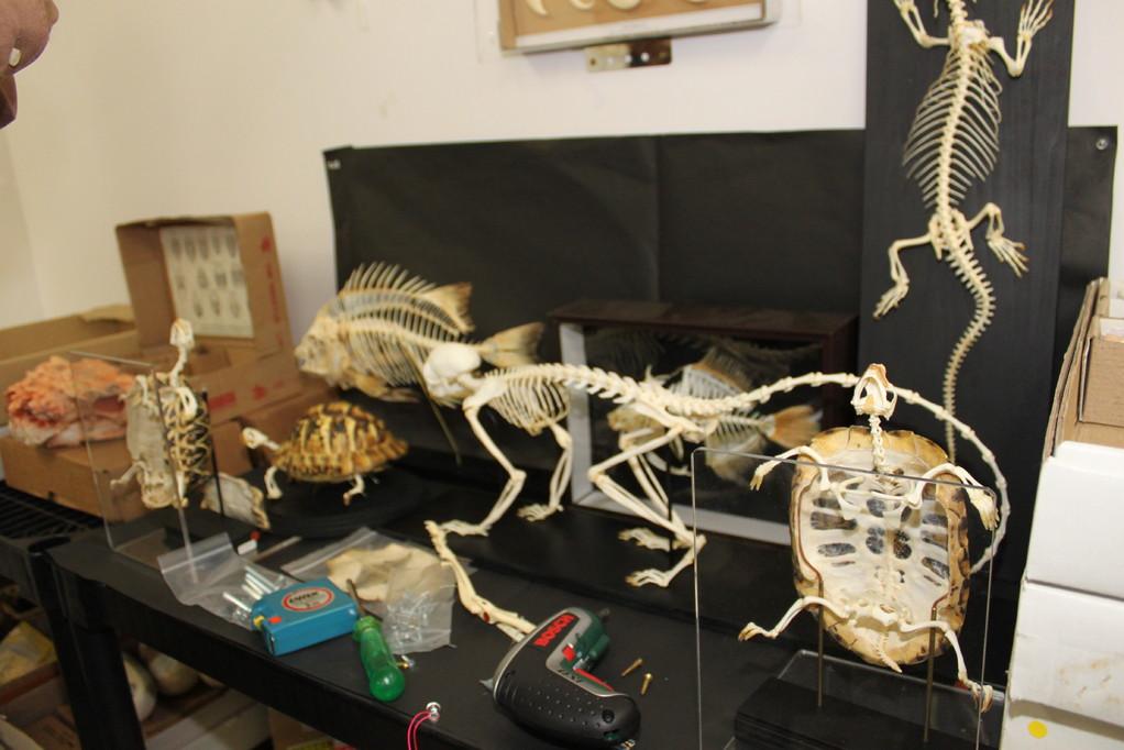 ㈲ミュージアムインポート 骨、骨、骨です
