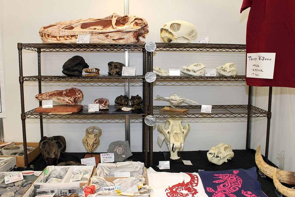 左上の頭骨は、アリオラムス頭骨レプリカ。21万8千円。今年の目玉の1つです。