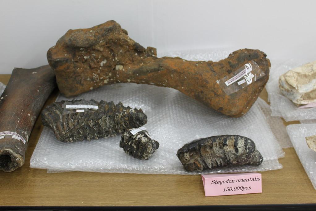 化石 ふきぬき