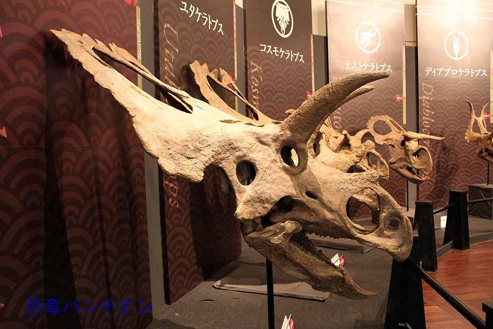 コアウイラケラトプス Coahuiaceratops