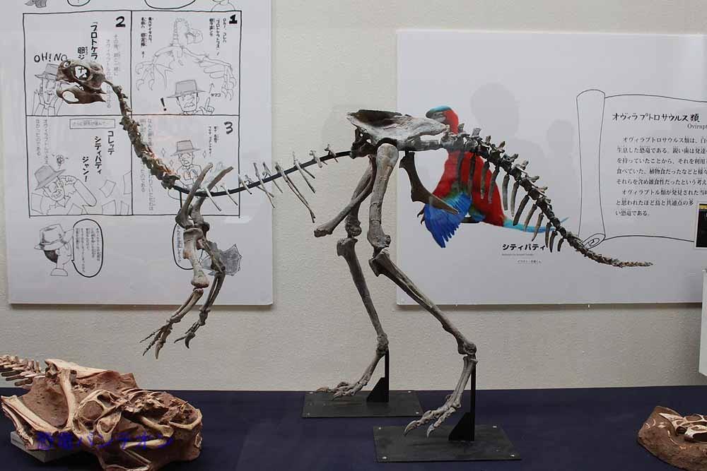 7.巣を守り卵を抱く恐竜(オヴィラプトロサウルス類) インゲニア