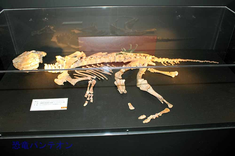 プシッタコサウルス(実物化石)