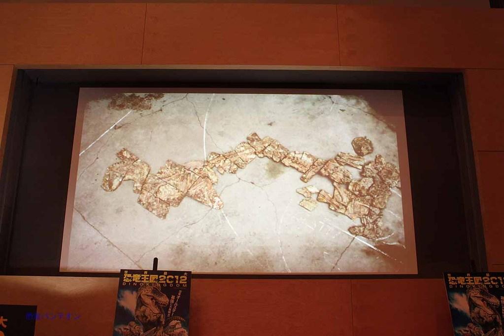 ユティラヌス標本