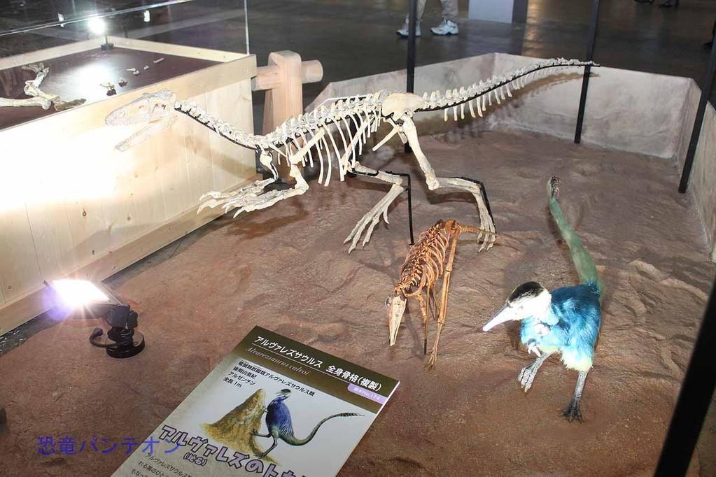 ウラテサウルス骨格。小さいほうはアルヴァレズサウルス骨格
