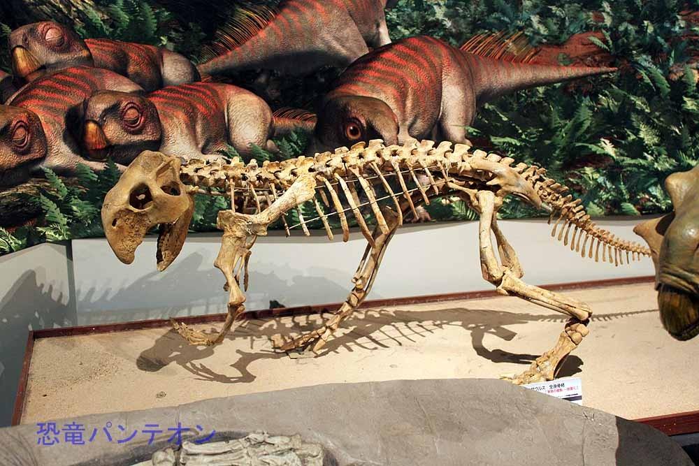 プシッタコサウルス骨格