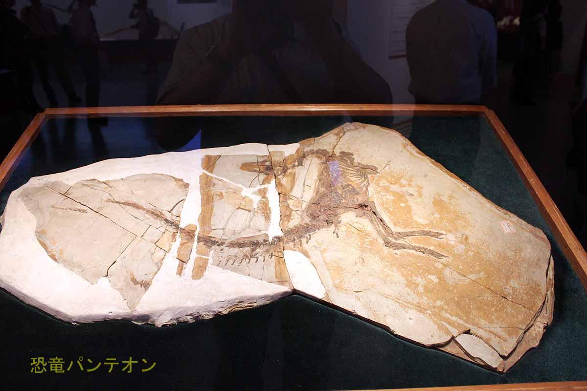 シノサウロプテリクス