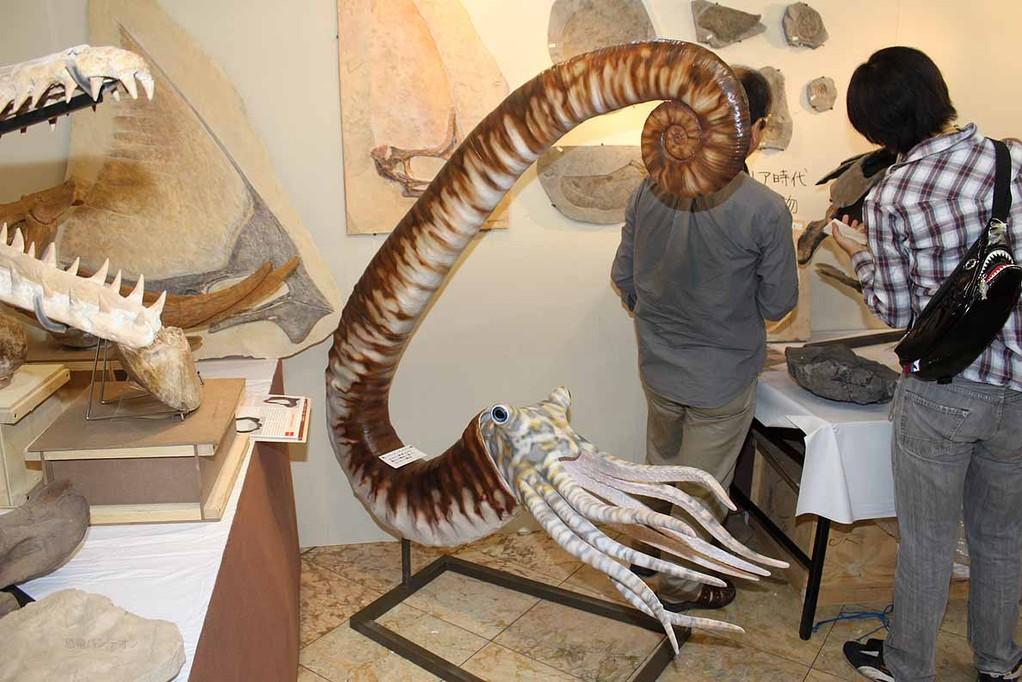 Zoic Srl (A-2)イタリア 巻いていないアンモナイト これまでに発見された最大の標本に基づいて作られた模型。30万円