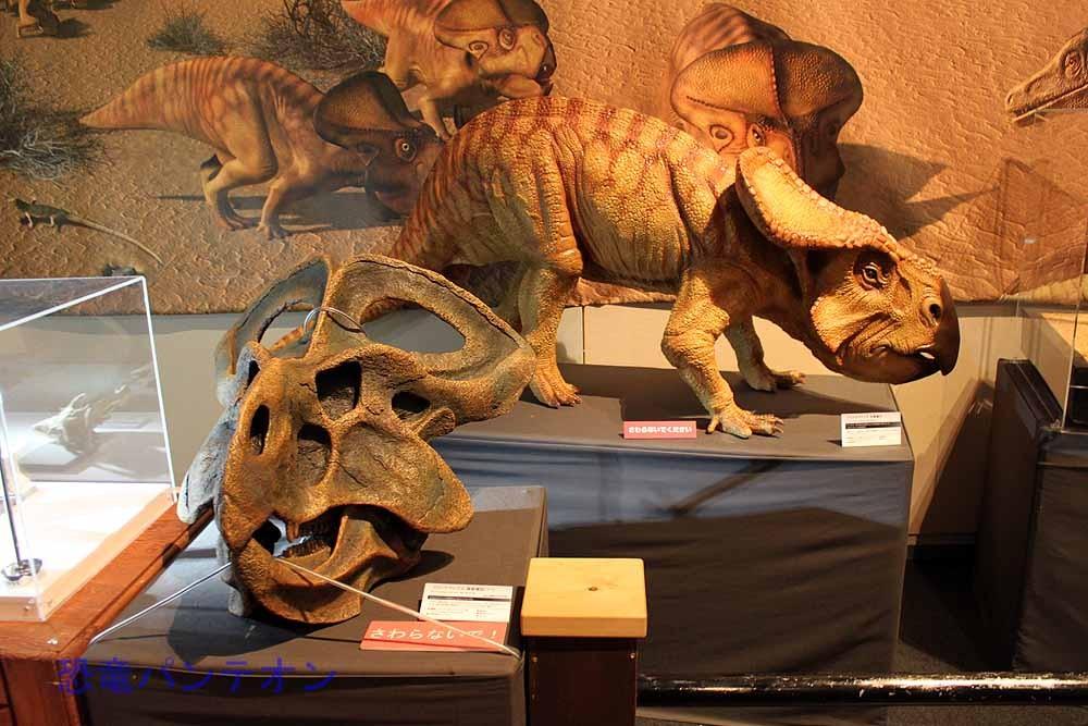 プロトケラトプス頭骨複製とプロトケラトプス生態復元。