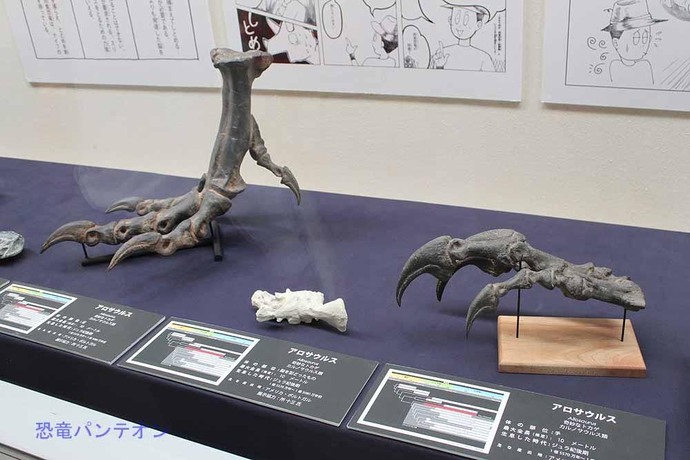 展示の最初は、アロサウルスを例にとって肉食恐竜の基本的な特徴を解説しています。