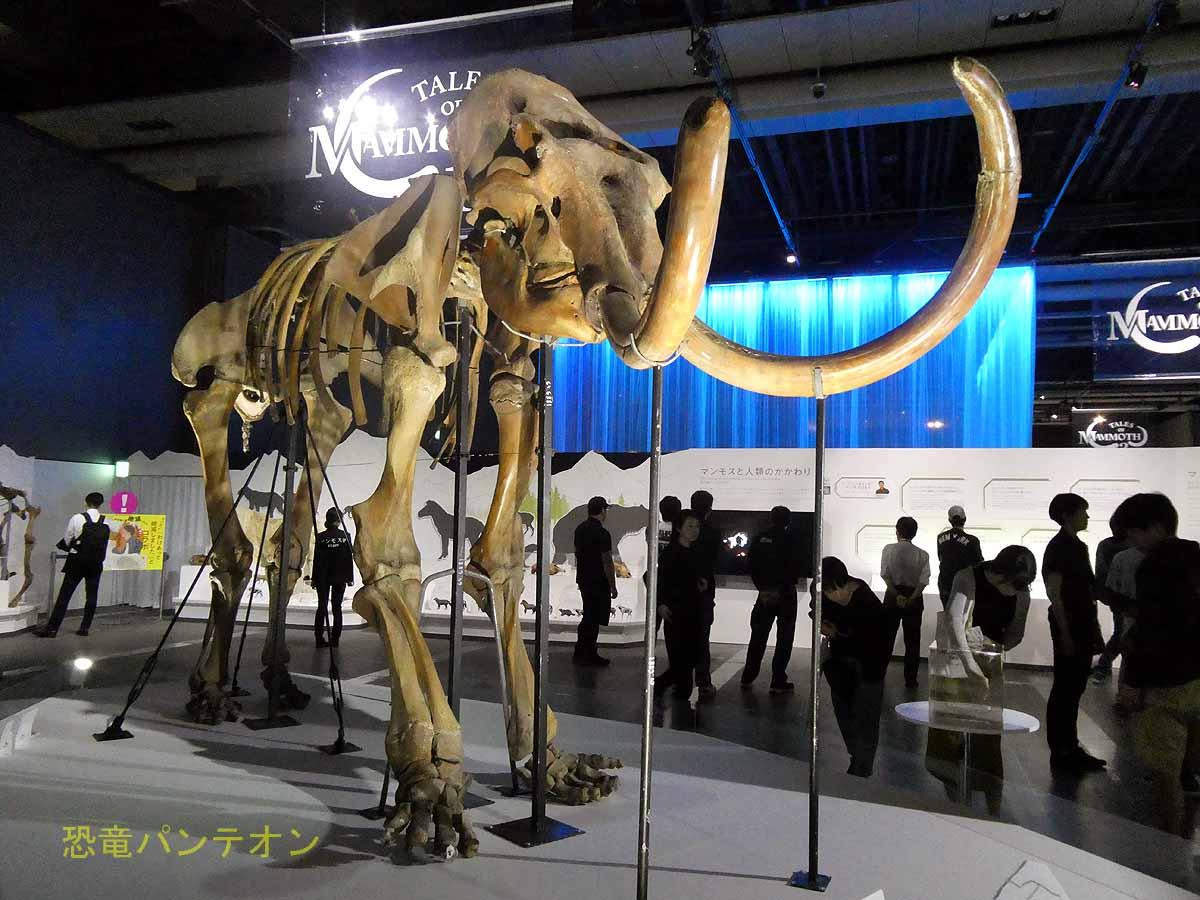 チュラプンスキーのケナガマンモス骨格