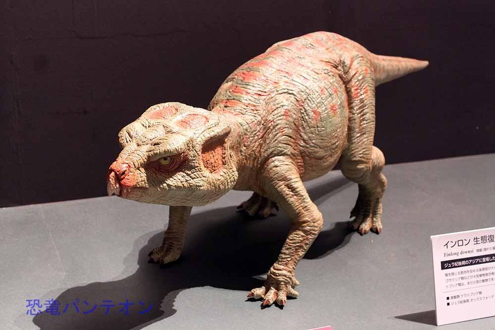 展示はアジアの基盤的ケラトプシア類から始まります。これはジュラ紀後期のインロン Yinlong の生態復元モデル。
