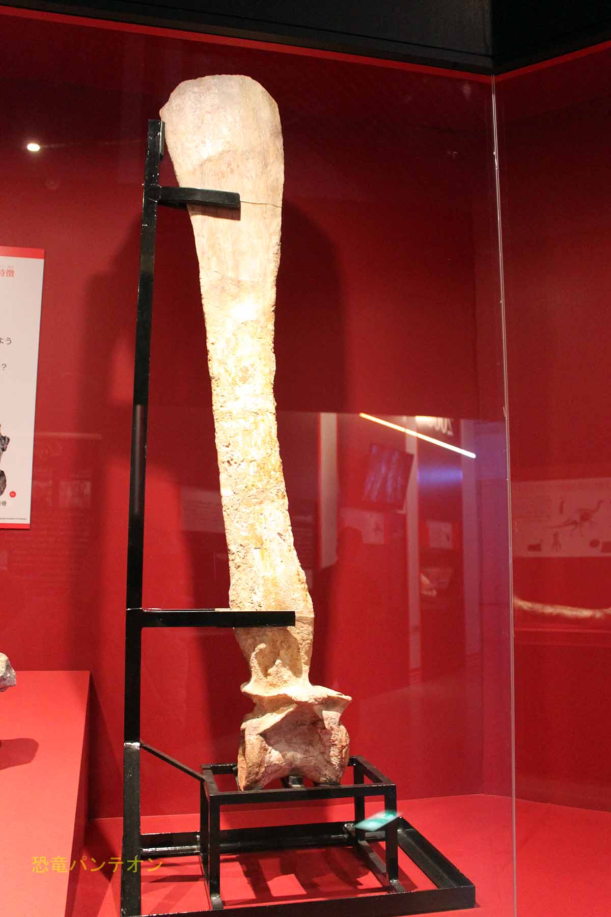 スピノサウルス脊椎骨