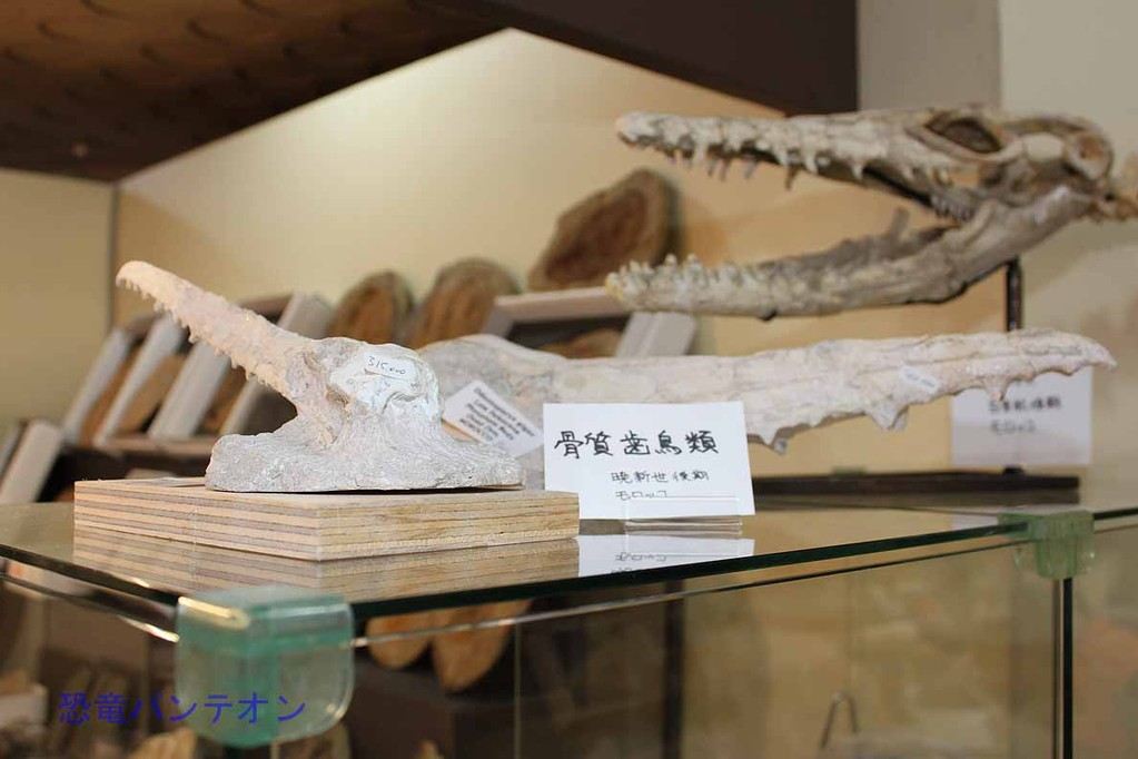 Zoic Sri 骨質歯鳥類