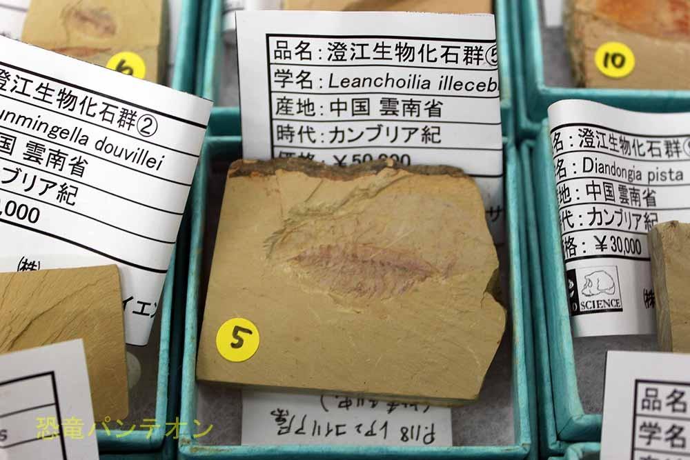 パレオサイエンス チェンジャン(澄江)の化石