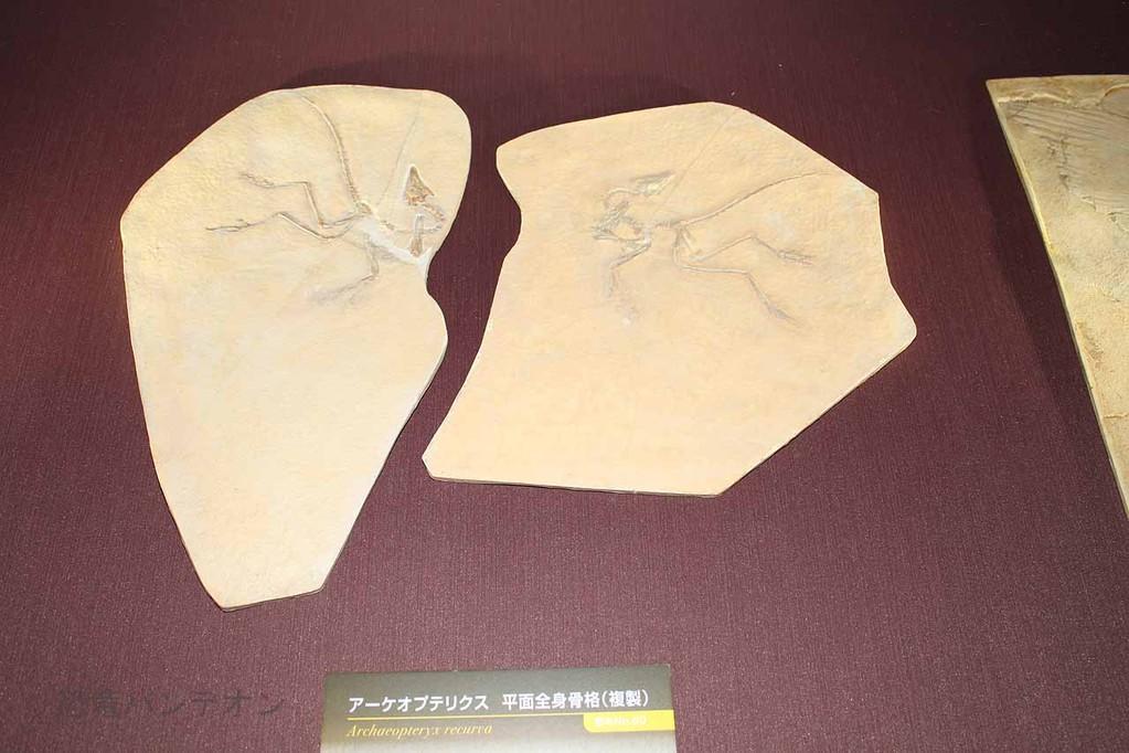 アーケオプテリクス アイヒシュタット標本