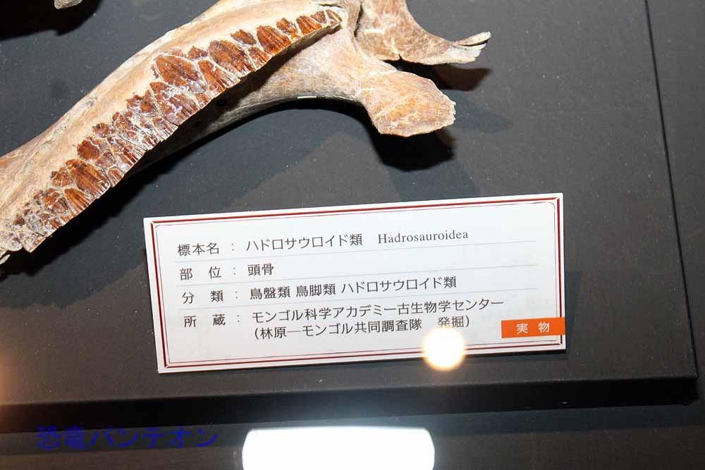 ハドロサウロイド類(実物化石)