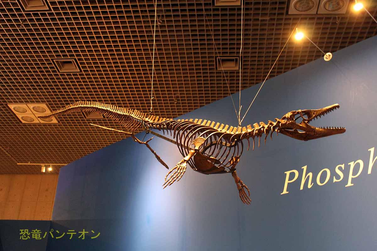 フォスフォロサウルス骨格