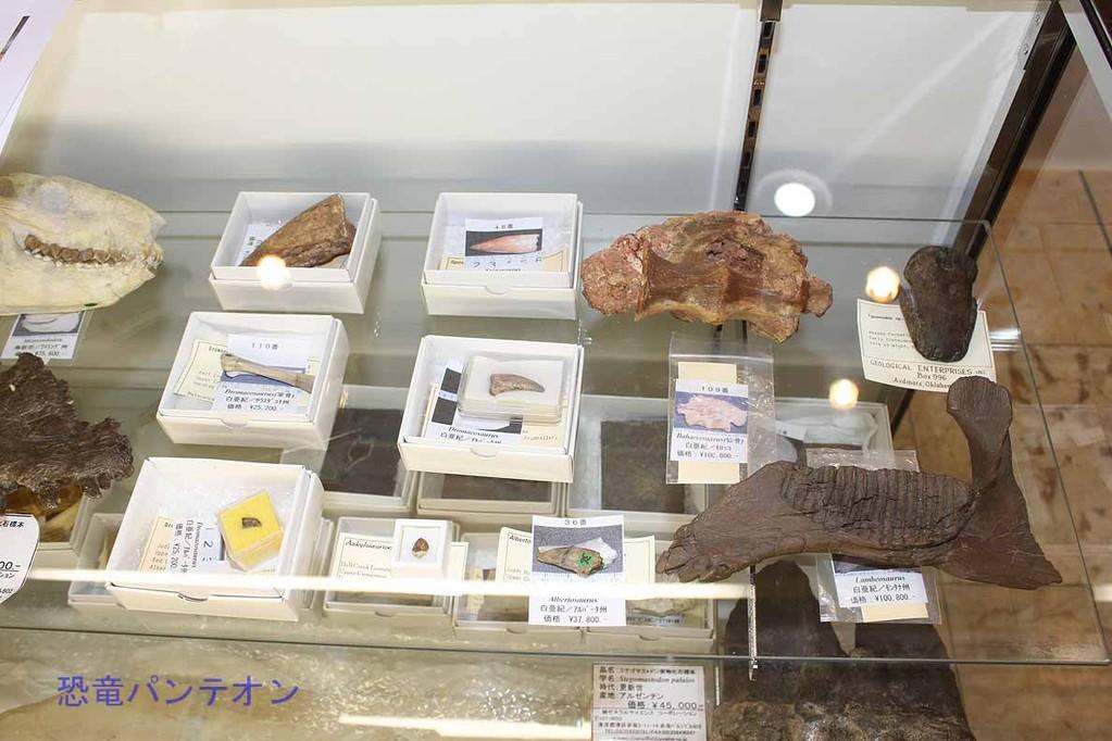 (株)ゼネラルサイエンスコーポレーション 爪や椎骨など実物化石