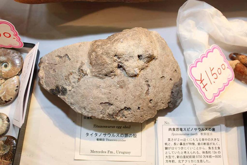 大江理工社(58) ティラノサウルス類の卵殻 Mercedes層 ウルグアイ