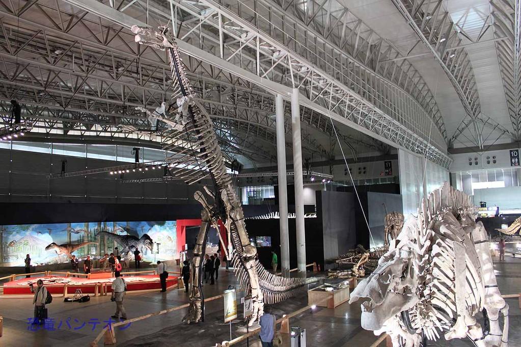 2本足で立っているのがフアシアオサウルスです。