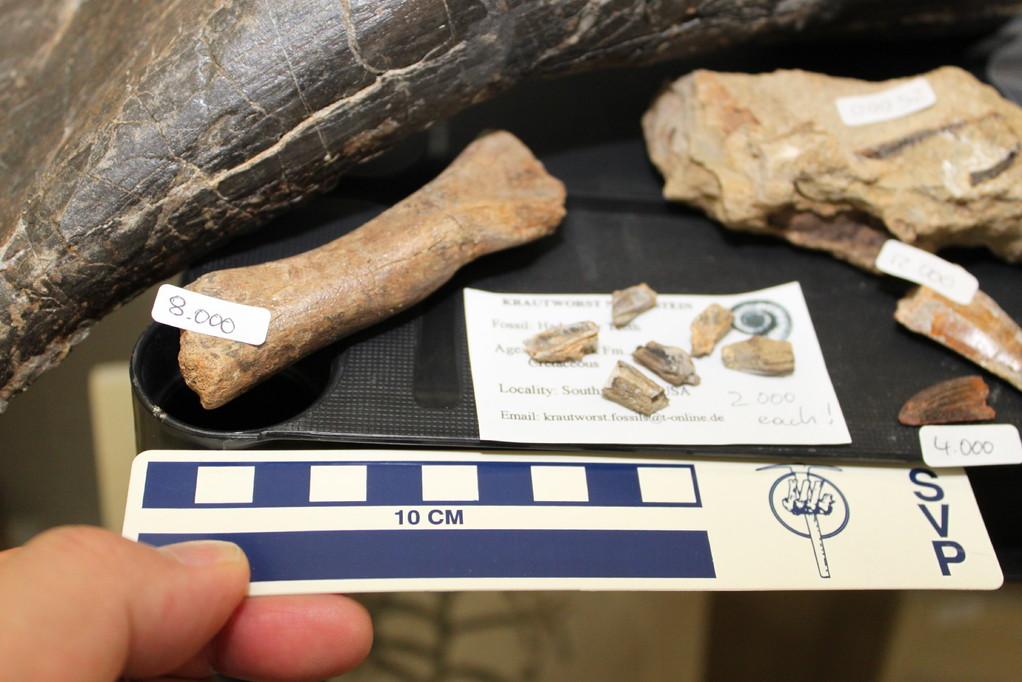 Krautworst Naturstein ハドロサウルス類の歯など