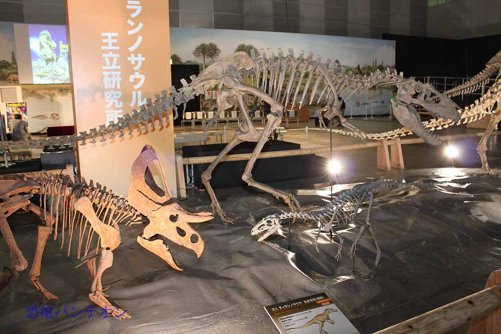 テラトフォネウス全身骨格。手前右はズニ ティランノサウラ、左はズニケラトプス