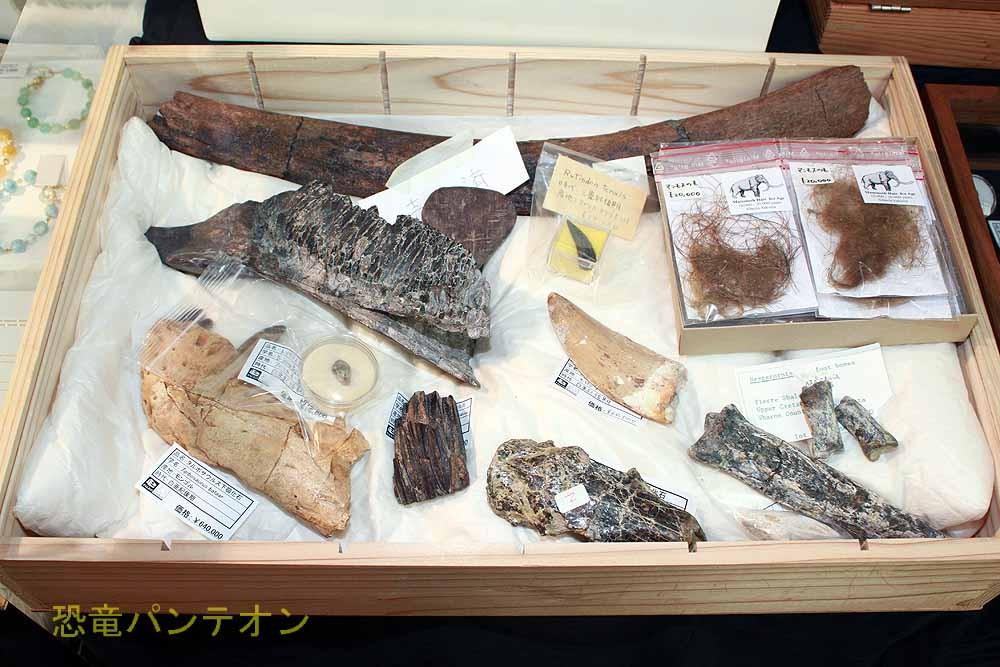 パレオサイエンス 社長の中川さんは、恐竜倶楽部の事務局長でもあります。