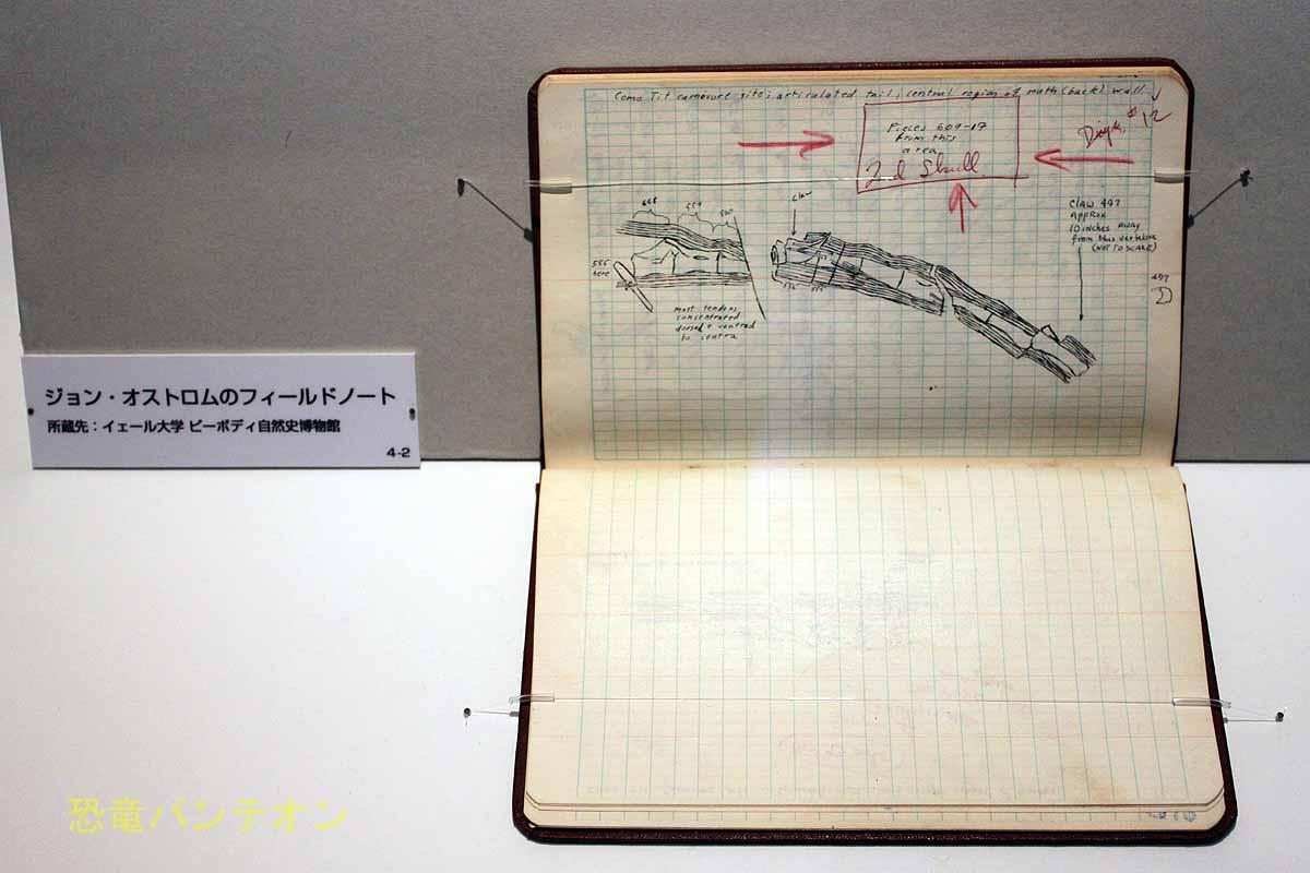ジョン・オストロムのフィールドノート