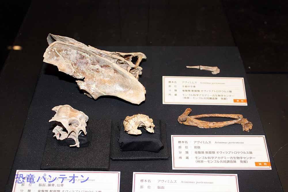 アヴィミムス腸骨、仙骨ほか